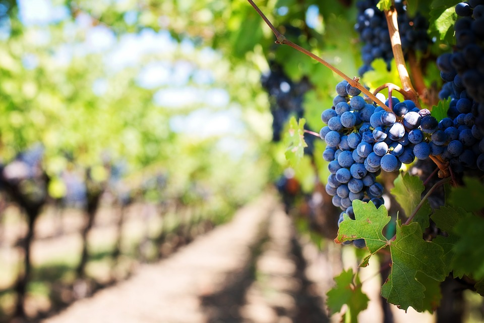 Hunter Valley Food and Wine Private Day Tour